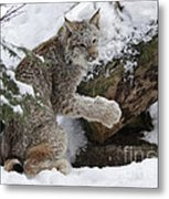 Adorable Baby Lynx In A Snowy Forest Metal Print