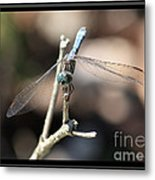 Adorable Dragonfly With Border Metal Print