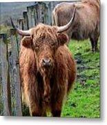Adorable Highland Cow Metal Print