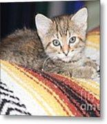 Adorable Kitten Metal Print
