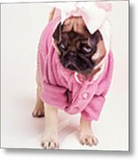 Adorable Pug Puppy In Pink Bow And Sweater Metal Print
