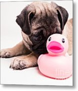 Adorable Pug Puppy With Pink Rubber Ducky Metal Print