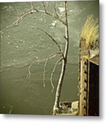 Adversity Metal Print by Thomas Young