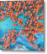 Aerial Drone View With Fir Tree Fall Metal Print
