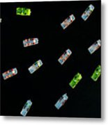 Aerial View Of A Dozen Colorful Pedal Metal Print