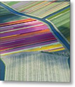 Aerial View Of Flower Fields In Spring Metal Print