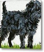 Affenpinscher Dog Metal Print