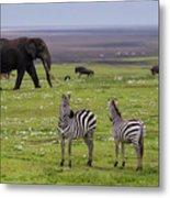 Africa Tanzania African Elephant Metal Print