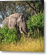 African Bush Elephant Metal Print