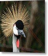 African Crowned Crane 1 Metal Print