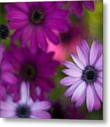 African Daisy Collage Metal Print