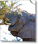 African Elephant Browsing In Kruger National Park-south Africa Metal Print