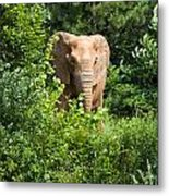 African Elephant Eating In The Shrubs Metal Print
