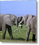 African Elephant Greeting Endangered Species Tanzania Metal Print