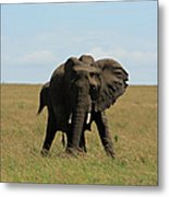 African Elephant Masai Mara Kenya Metal Print