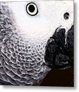 African Gray Parrot Art - Seeing Is Believing Metal Print