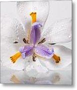 African Irises Xv Metal Print