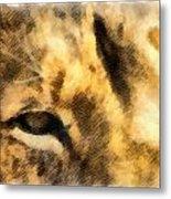 African Lion Eyes Metal Print