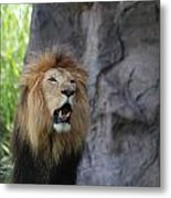 African Lion Roar Metal Print