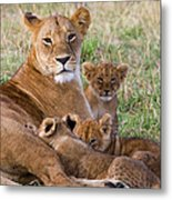 African Lioness And Young Cubs Metal Print