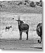 African Plains Metal Print