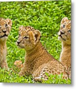 African Princesses Metal Print by Ashley Vincent
