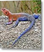 African Safari Lizard Metal Print