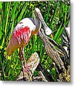African Spoonbill In San Diego Zoo Safari Park In Escondido-california Metal Print
