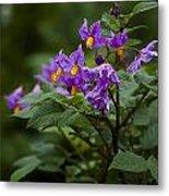 African Violets Metal Print