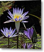 African Waterlily Dazzle -- Plus Dragonfly Metal Print