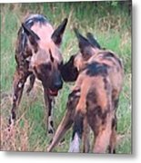 African Wild Dogs Metal Print