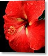 Georgia Red Hibiscus After A Rain Greensboro Georgia Art Metal Print