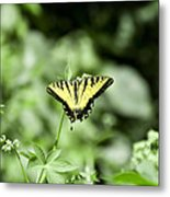 Afternoon Butterfly Metal Print