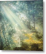 Afternoon Delight Metal Print by William Schmid