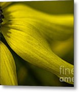 Afternoon Flower Metal Print