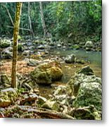 Afternoon In The Jungle Metal Print