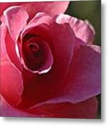 Afternoon Rose Metal Print
