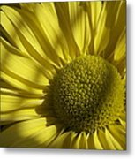 Afternoon Yellow Metal Print