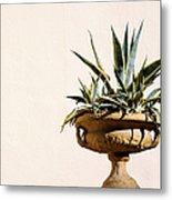Agave In Pot Metal Print