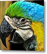 Age And Beauty Metal Print