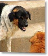 Aggressive Dogs Metal Print