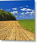 Agricultural Landscape - Young Corn Field Metal Print