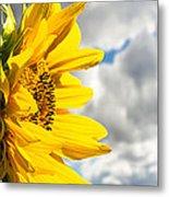 Ah Sunflower Metal Print