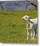 Ahhhh Spring Is Here Metal Print