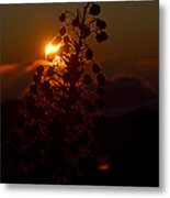 Ahinahina - Silversword - Argyroxiphium Sandwicense - Sunrise On The Summit Haleakala Maui Hawaii  Metal Print