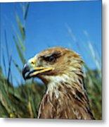 Aigle Imperial Aquila Heliaca Metal Print