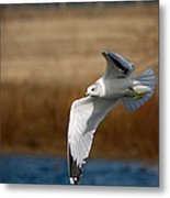 Airborne Seagull Series 1 Metal Print