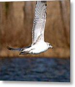 Airborne Seagull Series 2 Metal Print
