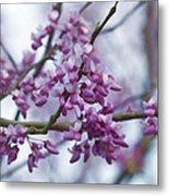 Alabama Redbuds Metal Print