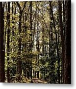 Alabama Woodlands In Spring 2013 Metal Print